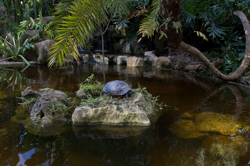 The turtle pond is near the depot for the trams that run tours through the Flamingo Gardens.