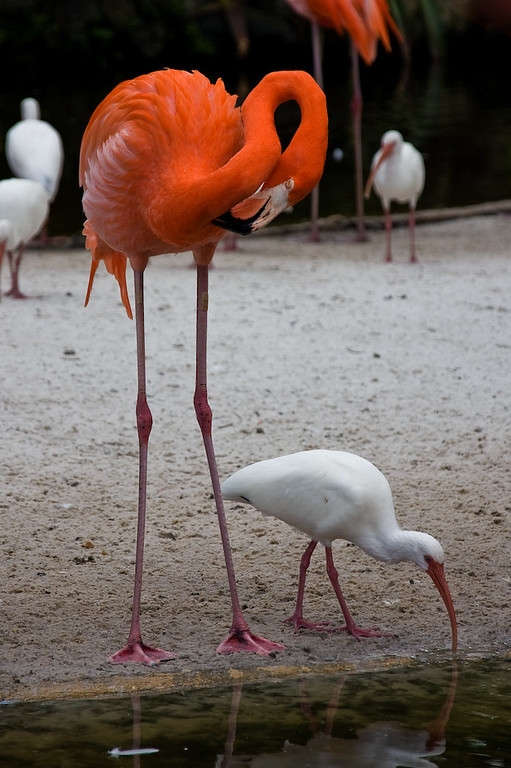 Grooming and feeding - two all-important activities for birds.