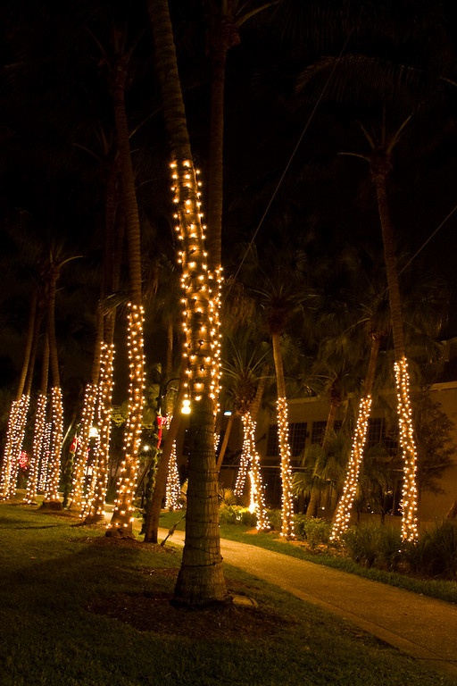 Twinkling lights wrapped around palm trees create a festive passageway.