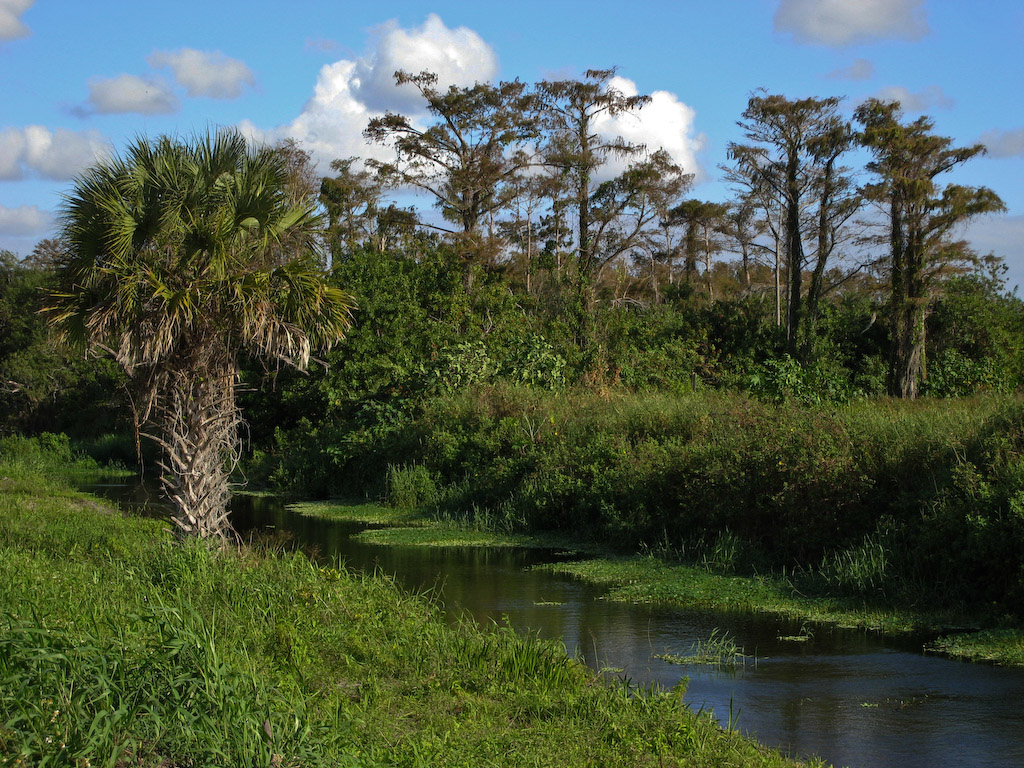 """Loxahatchee means """"River of Turtles.""""  We saw no turtles today, but we sure had a great morning to enjoy Mother Nature at her best."""