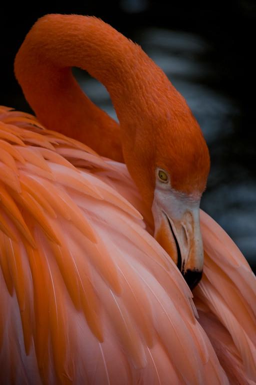 Flamingo Gardens, Davie, Florida: <br /> The name Flamingo comes from the Latin for flame.