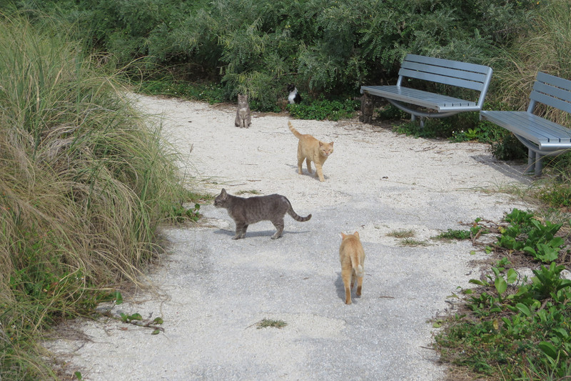 The park is also home to a large population of feral cats.