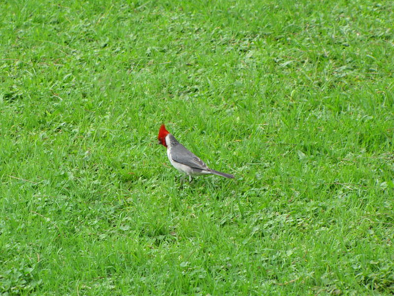 We also saw some red crested cardinals.