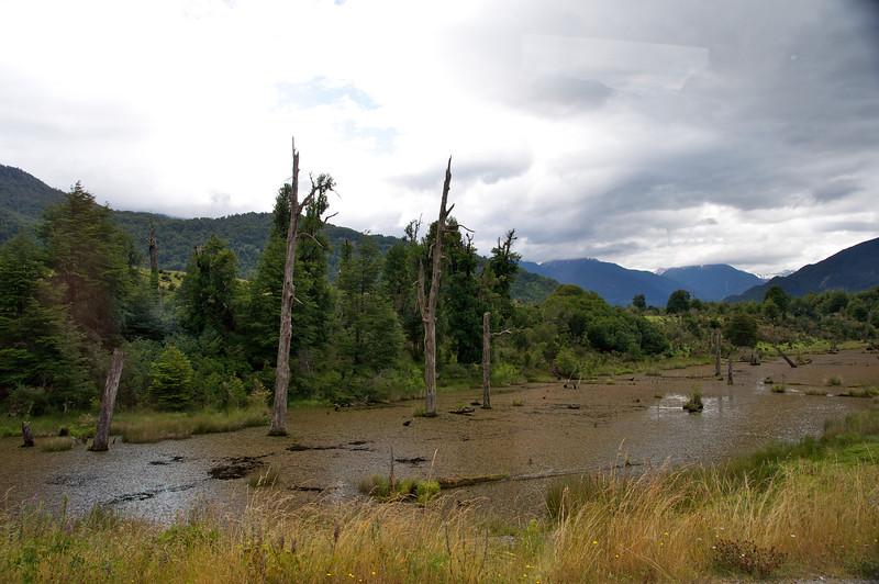 Phatom Lagoon, Example of Abundance of Deadwood2011-01-0714-00-42