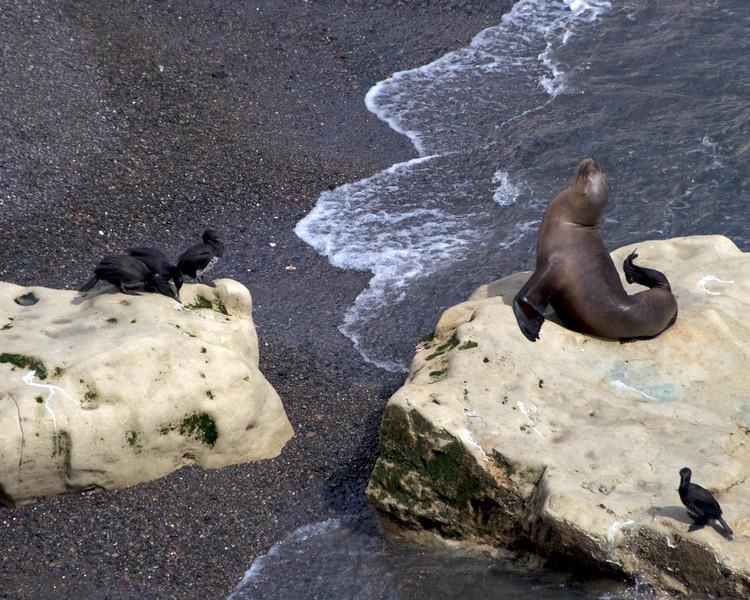 Squealing Sea Lion2011-01-1610-32-38