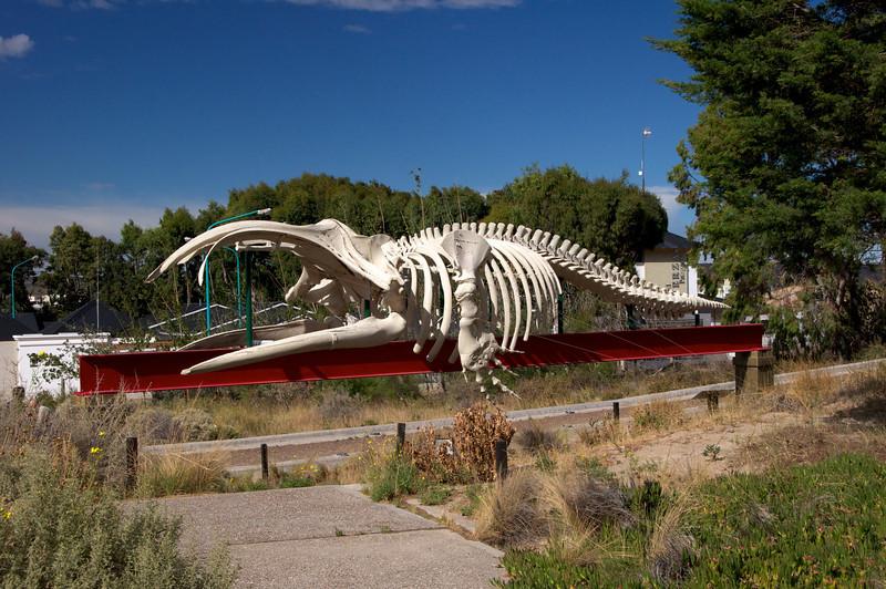 Whale Skeleton2011-01-1609-42-10