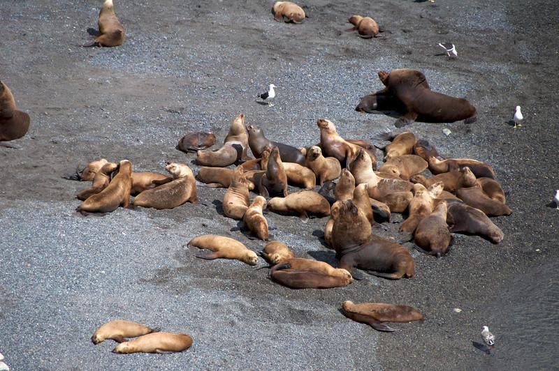 Sunning Sea Lions2011-01-1610-31-56