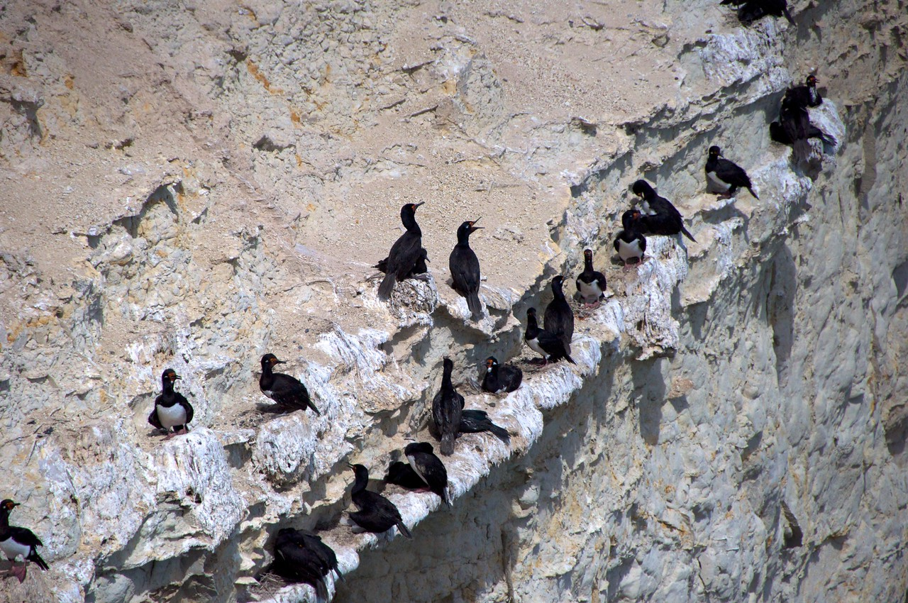 Rock Shags2011-01-1610-33-27