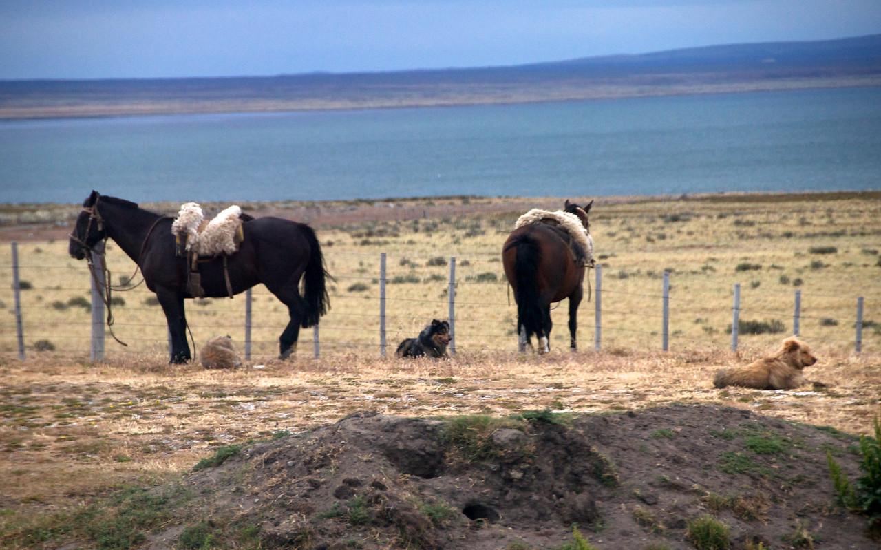 Even Animals Rest2011-01-1112-39-01