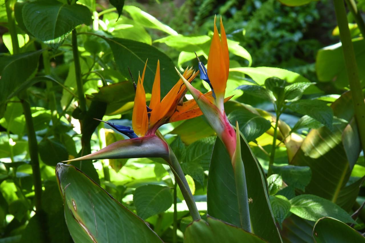 Birds of Prey Flowers