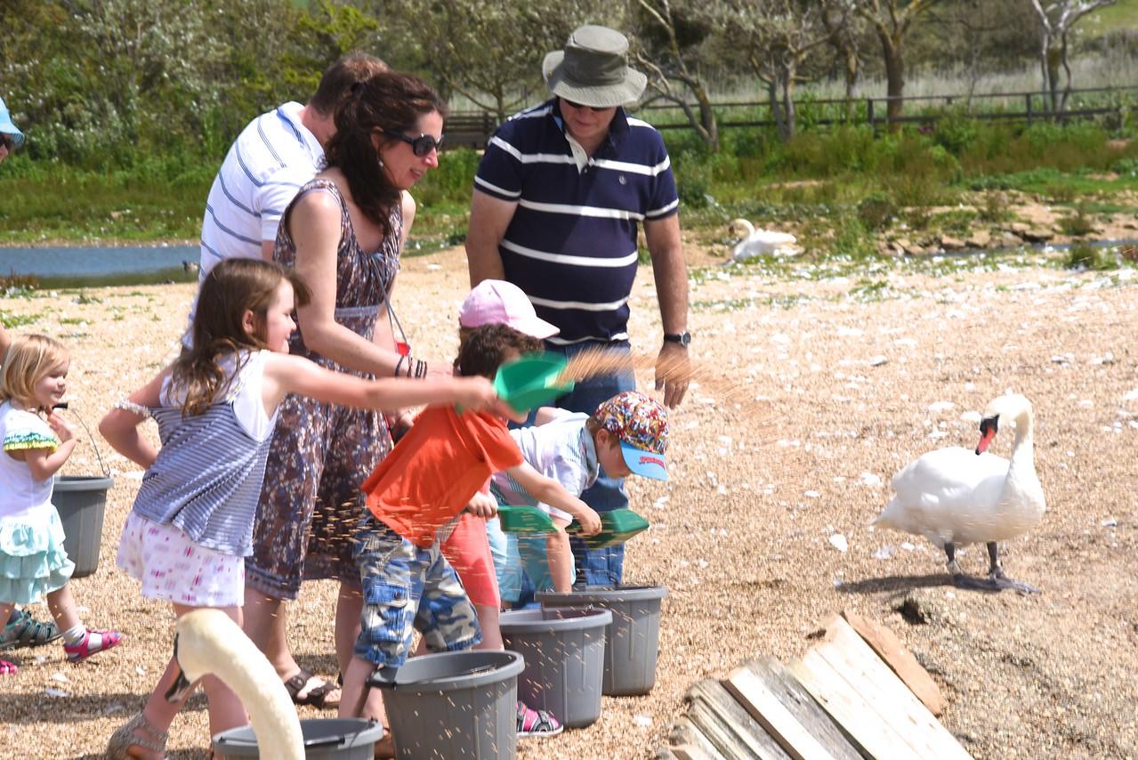 Children Feeding The Swans