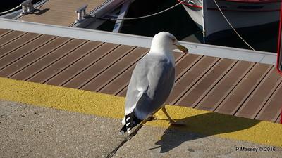 Cheeky Seagull Marina Waterfront Kavala PDM 02-11-2016 12-26-24
