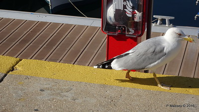 Cheeky Seagull Marina Waterfront Kavala PDM 02-11-2016 12-26-26