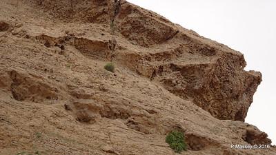 Jabel Maleihah Fossil Rock Outcrop Fujairah PDM 22-03-2016 13-27-19