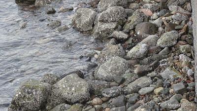 Spot the Sandpiper Muttrah Muscat PDM 20-03-2016 17-04-26