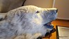 Polar Bear Hallway Lobby Saloon Deck LOFOTEN PDM 28-07-2016 12-39-29