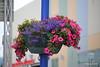 Hanging Basket Finnsnes 28-07-2016 11-19-03