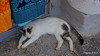 Hydra Cat PDM 15-06-2017 10-46-31
