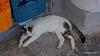 Hydra Cat PDM 15-06-2017 10-46-30