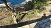Cats Castle Pigeon Island Kusadasi PDM 17-06-2017 07-33-08