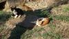Cats Castle Pigeon Island Kusadasi PDM 17-06-2017 07-33-11