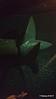 QUEEN MARY's last Manganese Bronze Propeller 18-04-2017 17-19-55