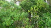 Monkeys are in there Ganga Talao Grand Bassin Mauritius 01-12-2017 11-20-05