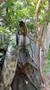 Common Brown or Mayotte Lemurs Plage N'Gouja Kani Keli Mayotte 09-12-2017 11-04-36c