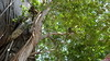 Common Brown or Mayotte Lemurs Plage N'Gouja Kani Keli Mayotte 09-12-2017 11-07-05