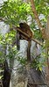 Common Brown or Mayotte Lemurs Plage N'Gouja Kani Keli Mayotte 09-12-2017 11-04-46c