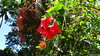 De Coconi Botanical Garden Barakani Mayotte 09-12-2017 12-20-36