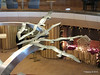 Seagull Sculpture Atrium ARTANIA PDM 15-12-2014 10-57-52