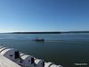 FURZEY SQUIRREL Poole Harbour PDM 14-07-2014 08-10-20
