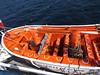 mv FUNCHAL Observation Deck Lifeboats PDM 22-04-2014 14-05-09