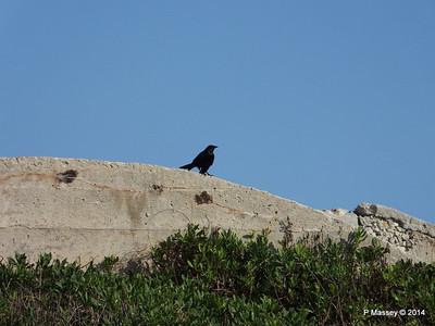 Crow El Morro 01-02-2014 09-29-01