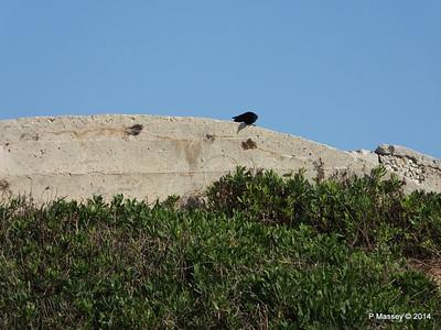 Crow El Morro 01-02-2014 09-29-08