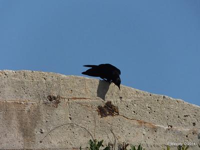 Crow El Morro 01-02-2014 09-29-05
