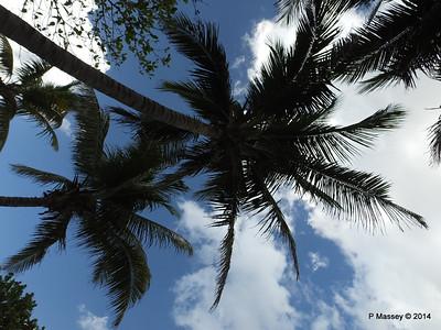 Gardens Hotel Nacional de Cuba 31-01-2014 18-56-25
