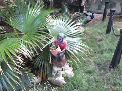Peacock Hotel Nacional de Cuba 31-01-2014 20-25-31