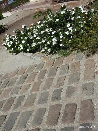 Flowers Path to El Morro Santiago de Cuba 06-02-2014 13-49-59