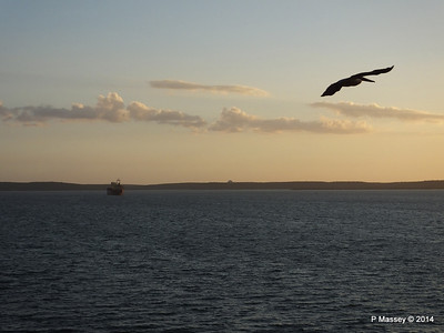 Pelican in Flight Cienfuegos 08-02-2014 18-02-14