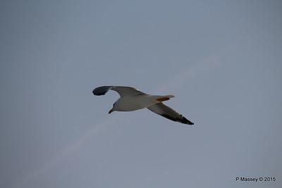 Seagull Saronic Gulf Agistri PDM 19-10-2015 14-10-36