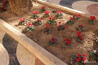 Watering Cyclamen Esplanada d'Espanya Alicante 26-11-2015 11-56-00