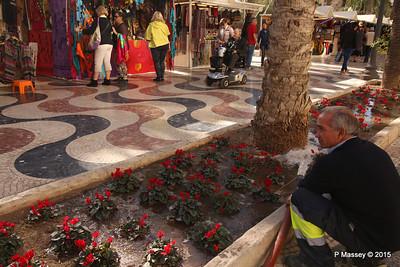 Watering Cyclamen Esplanada d'Espanya Alicante 26-11-2015 11-56-38