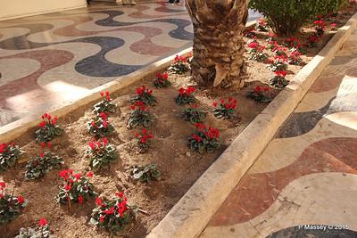 Watering Cyclamen Esplanada d'Espanya Alicante 26-11-2015 11-56-02