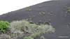 Volcanic Landscape Timanfaya to Mancha Blanca LZ-67 PDM 30-11-2015 10-58-33
