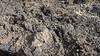 Lava Montana Negra Lanzarote PDM 30-11-2015 10-19-32
