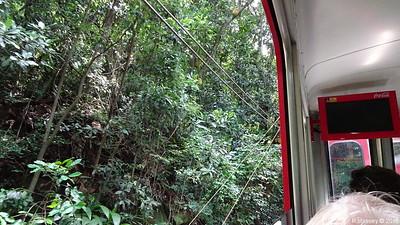 Down Corcovado Rack Railway Rio de Janeiro PDM 09-12-2015 13-29-04