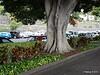 Tree Ave Francisco de la Roche Santa Cruz de Tenerife PDM 01-12-2015 11-48-13