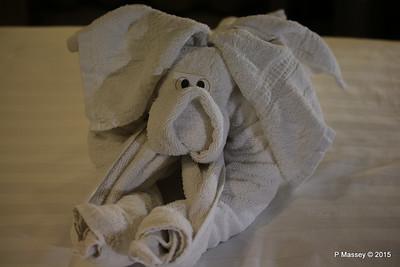 Elephant Towel 10032 NIEUW AMSTERDAM 18-07-2015 20-08-17